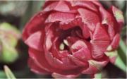 Foires aux plantes Les Fêtes des Plantes de printemps et d'automne