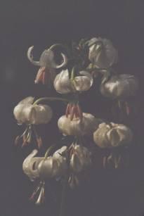 liliaceae       lilium       martagon       albiflorum       lys martagon blanc